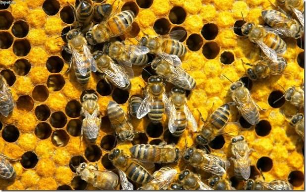 Цікаві факти про бджіл