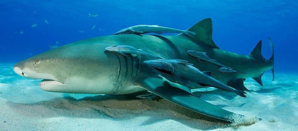 Цікаві факти про акул