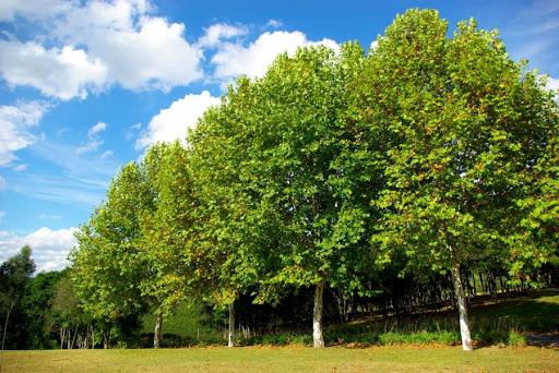 Цікаві факти про дерева