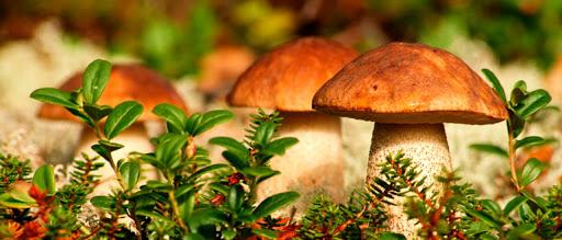 Цікаві факти про гриби