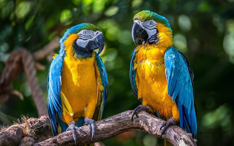 Цікаві факти про папуг