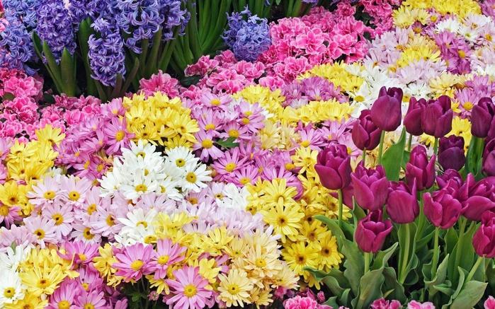 Цікаві факти про квіти