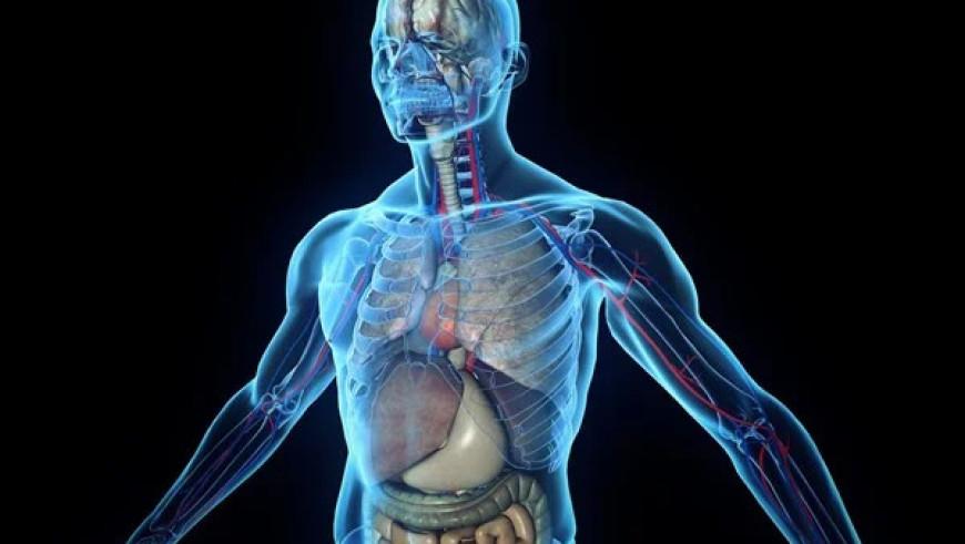Цікаві факти про тіло людини