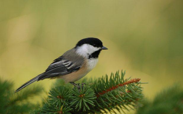 Цікаві факти про птахів