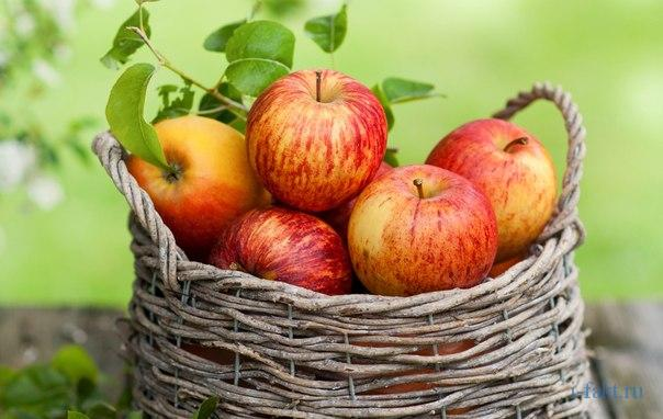 Цікаві факти про яблука