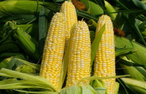 Цікаві факти про кукурудзу