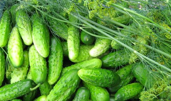Цікаві факти про огірки
