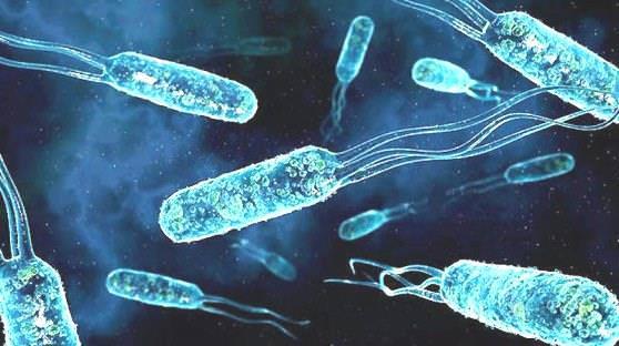 Цікаві факти про мікроби