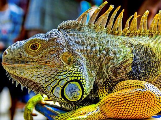 Цікаві факти про ящірок