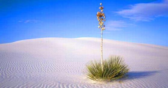 Цікаві факти про пісок