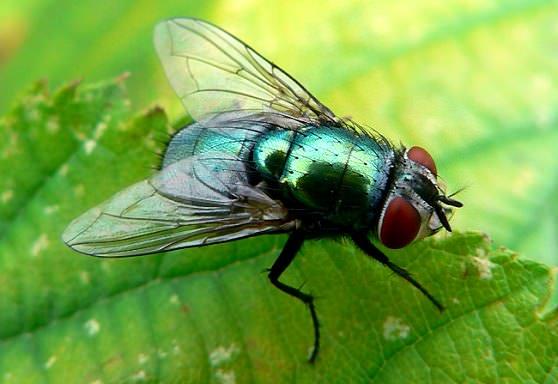 Цікаві факти про мух