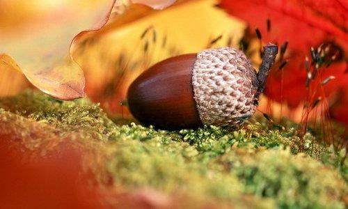 Цікаві факти про осінь