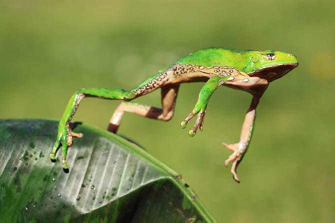Цікаві факти про жаб