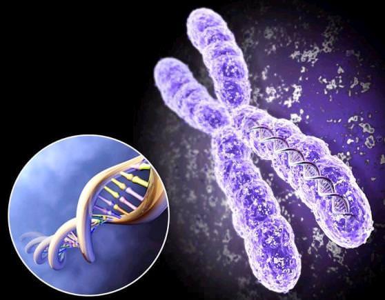 Цікаві факти про генетику