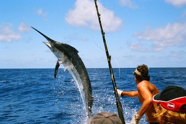 Цікаві факти про риболовлю