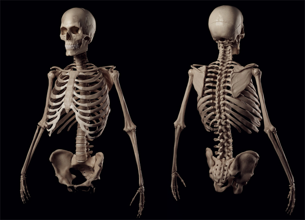 Цікаві факти про кістки людини