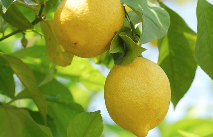 Склад лимона: вітаміни, мікроелементи і калорійність