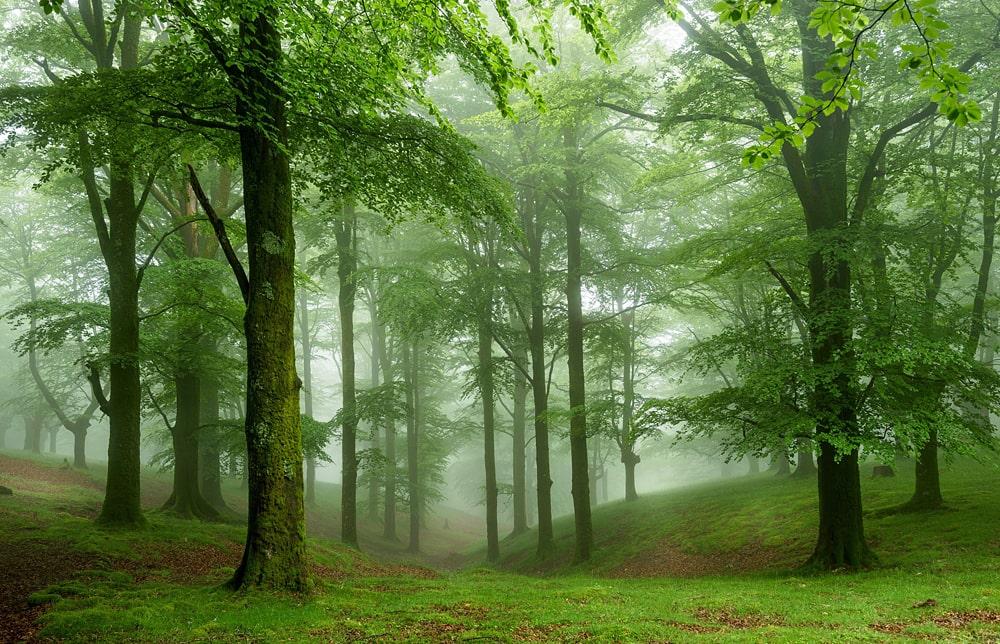 Цікаві факти про ліс