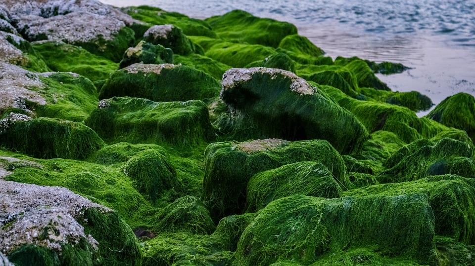 Цікаві факти про водорості
