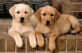 Цікаві факти про собак