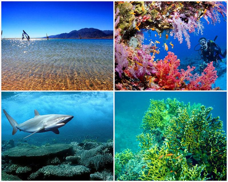Цікаві факти про Червоне море