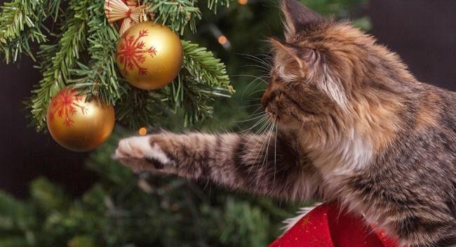 Як прикрасити ялинку на Новий рік? Кращі «наряди»!