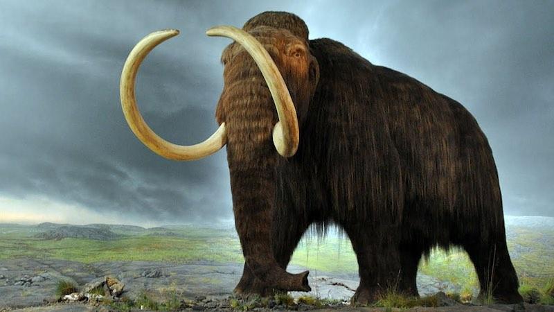 Цікаві факти про мамонтів