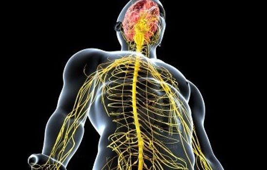 Цікаві факти про нервову систему людини
