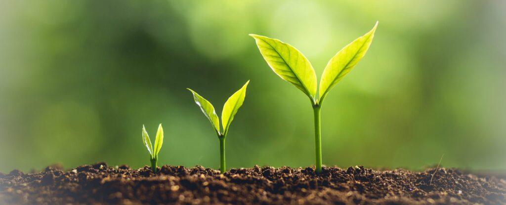 Цікаві факти про рослини
