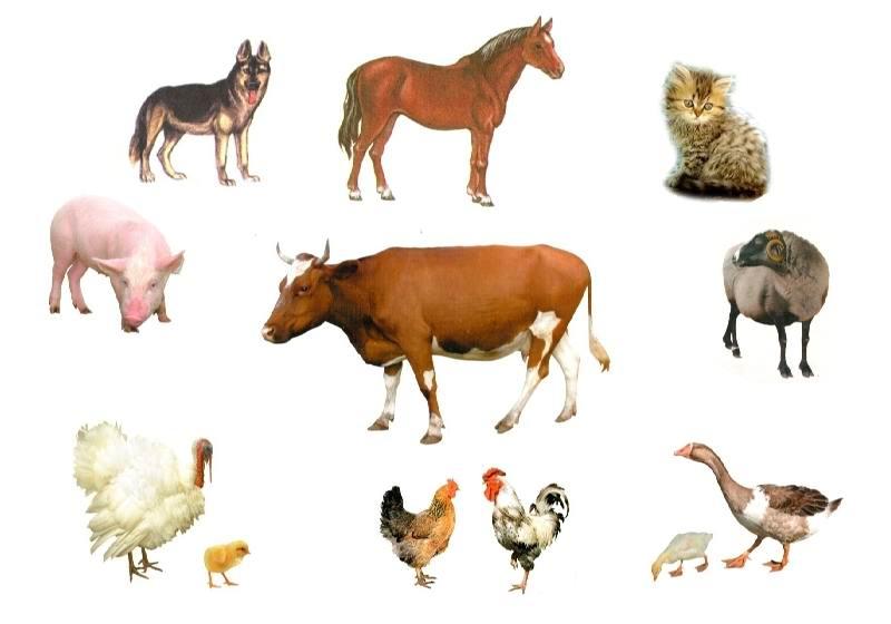 Цікаві факти про ветеринарію