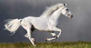 Цікаві факти про коней