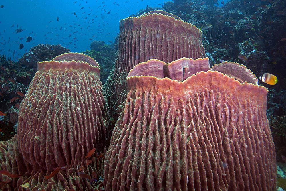 Цікаві факти про морську губку