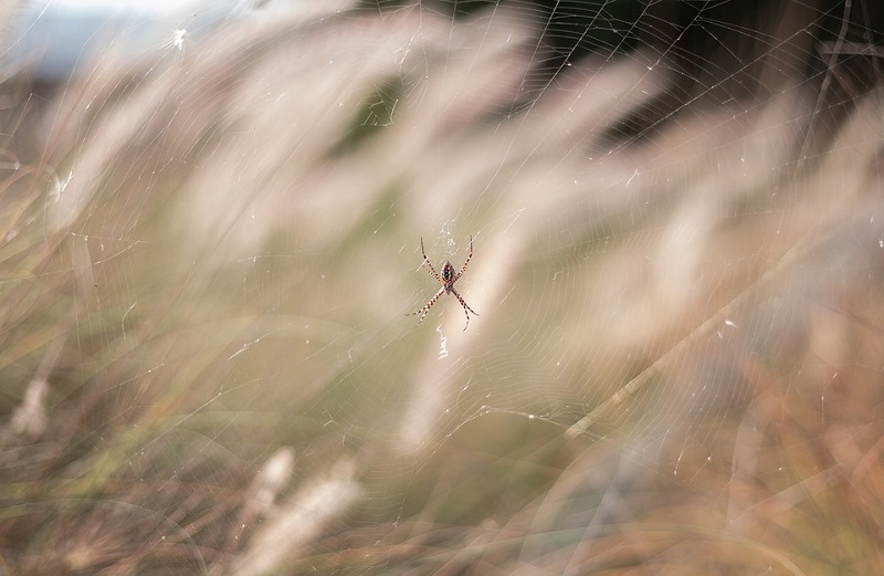 Цікаві факти про павуків
