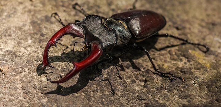 Цікаві факти про жуків