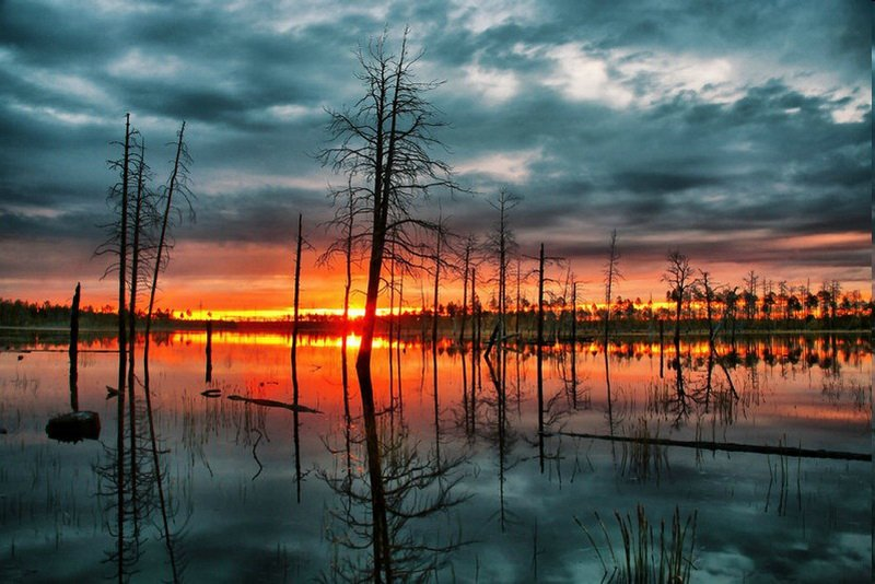 Цікаві факти про болота