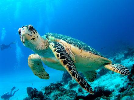 Цікаві факти про черепах