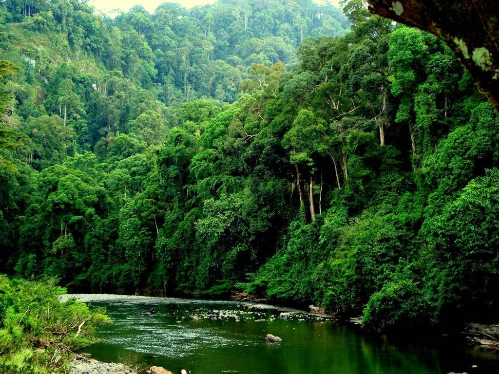 Цікаві факти про джунглі