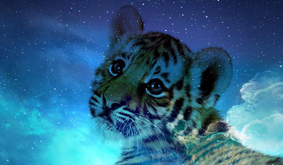 2022 рік кого: яка тварина за східним календарем