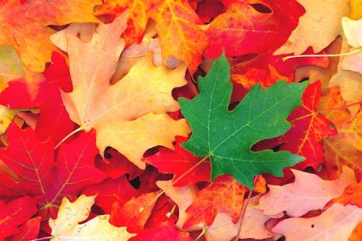 Цікаві факти про листя