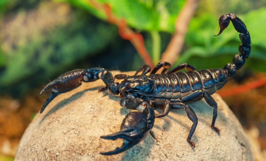 Цікаві факти про скорпіонів